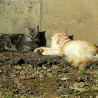 Мы на солнышке лежим... :: Валерия Яскович