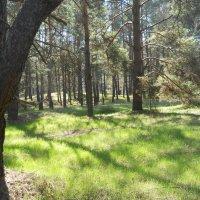 Весна в лесу :: Галина