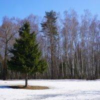 Апрель в лесопарке :: Ольга