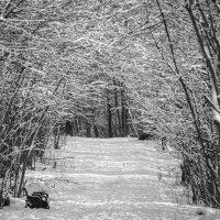 После снегопада. :: Владимир Безбородов
