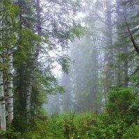 Утренний лес :: Сергей Чиняев