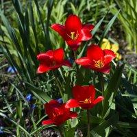 Весна, красна ... :: Владимир Икомацких