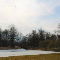 И спешит как воевода по лесам, полям апрель..... :: Tatiana Markova