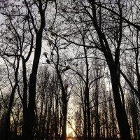 Закат сквозь леса :: Алексей