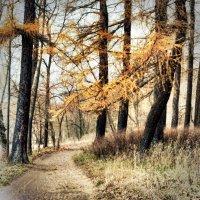 За поворотом - осень :: Андрей Колмаков