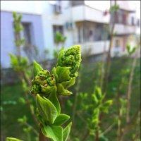Пришла  Весна! :: Надежда