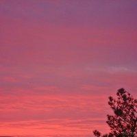 Краски небес :: Лидия (naum.lidiya)