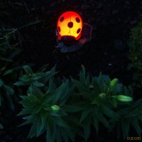 Вечерний свет :: Лидия (naum.lidiya)