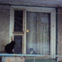 свидание через стекло :: Maryana Petrova