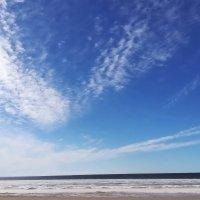Цвет настроения синий... :: veera (veerra)