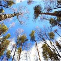 апрельские небеса.. :: Александр Шимохин