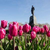 Тюльпановая весна. :: Анна Выскуб