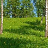 Лилейная поляна :: Сергей Чиняев
