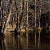 Лесные дебри.. :: Алла Кочергина