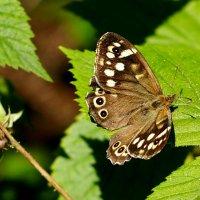 про бабочек 2 :: Александр Прокудин