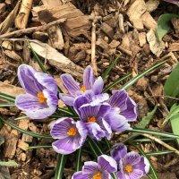 Весна!!! :: MILA MILA