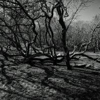 Gorki Park :: Марианна Привроцкая