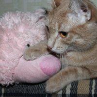 мой кот :: Елена