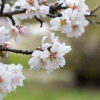 весна в Севастополе :: Виктория Комарова