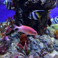Под водой :: dindin