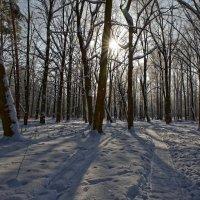 Ведущая в лес. :: Laborant Григоров