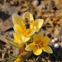 Пчела за данью полевой летит из кельи восковой.... :: Tatiana Markova