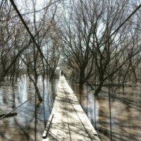 Весенний паводок :: Наталья Ильина