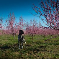 Охранник персикового сада. Бахчисарай :: Елена Маковоз