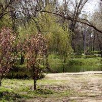 Весна идёт по парку. :: barsuk lesnoi