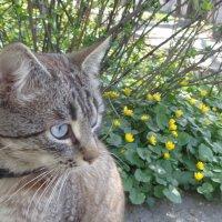 Красота вокруг создает красоту в душе кошки :: Алекс Аро Аро