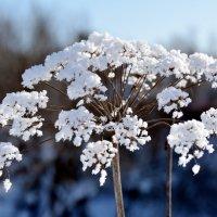 Зима :: Николай