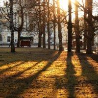 Апрельский вечер в Павловском парке :: Ирина Румянцева