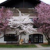 Весна наконец-то! :: Evgeniya
