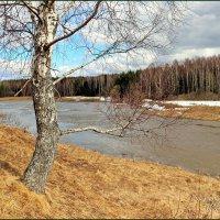 "река Которосль-""ЯРОСЛАВИЯ"" :: Владимир ( Vovan50Nestor )"