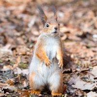 Не поняла, где орехи?? :: Alex Bush
