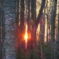 Утро в лесу :: Татьяна Лобанова