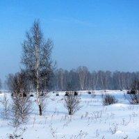 Кузбасская зима. :: Наталья Петровна Власова