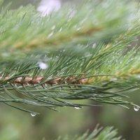 после дождя :: Димончик