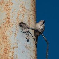 Гнездо нашел....Железный характер! :: Владимир Безбородов