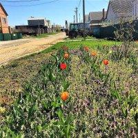 Весна в Краснодарском крае :: Алла ZALLA