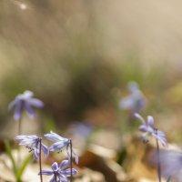 весна 4 :: Геннадий Свистов
