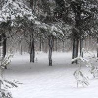 Деревья в снегу! :: Жанна