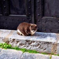 Кошка на улицах города :: Svetlana Erashchenkova