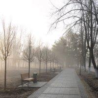 Утро с солнцем и туманом. :: Анатолий. Chesnavik.