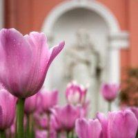 Цветы у церкви :: Дарья Воронина