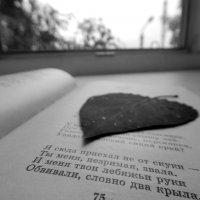 Закладка :: Валерий Цуркан