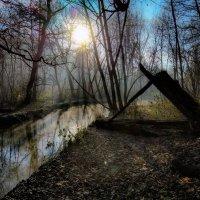 Утро в лесу :: Владимир Гараган