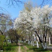 Тропинка в апрель :: Нина Бутко