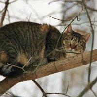 Коты прилетели :: Natali Positive