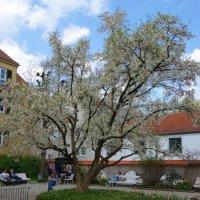 Любимый дворик  .. .весной... :: Galina Dzubina